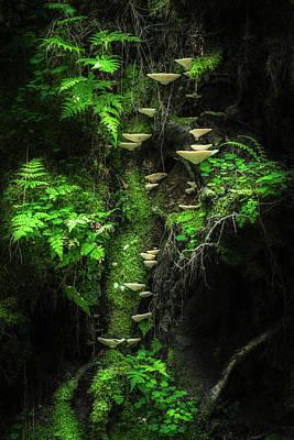 Mushroom Wall Art - Photograph - Mushroom Wall by Petri Damst??n