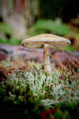 Photograph - Mushroom1 by Beth Sawickie