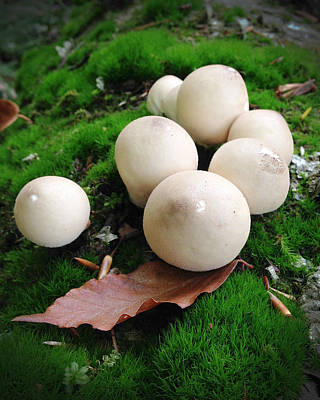 Mushroom13 Original