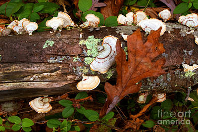 Photograph - Mushrooms And Leaf by Paul W Faust -  Impressions of Light