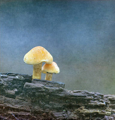 Photograph - Mushrooms by Angie Vogel