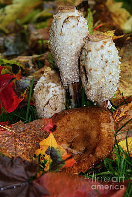 Target Threshold Nature Royalty Free Images - Mushrooms Fall Colors Royalty-Free Image by Steven Baier