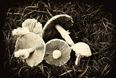 Photograph - Mushrooms In Sepia by Tony Grider