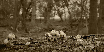 Photograph - Mushrooms In The Woods by Nikolyn McDonald