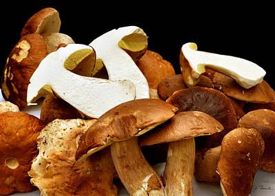 Photograph - Mushrooms by Joe Bonita