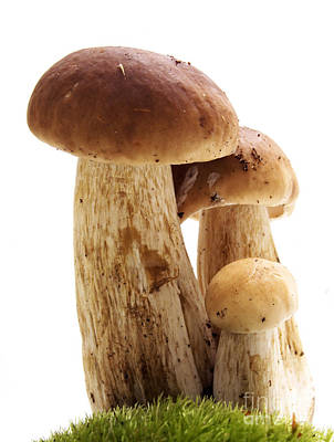 Cep Photograph - Mushrooms by Michal Bednarek
