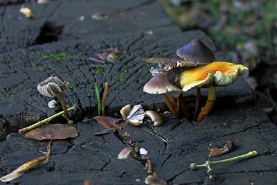 Photograph - Mushrooms On A Wall  by Tony Murtagh