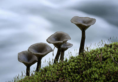 Art Print featuring the photograph Mushrooms On Moss by Betty Depee
