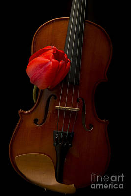 Fiddle Photograph - Music Lover by Edward Fielding