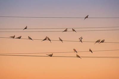 Early Bird Photograph - Music Of Light by John Fan