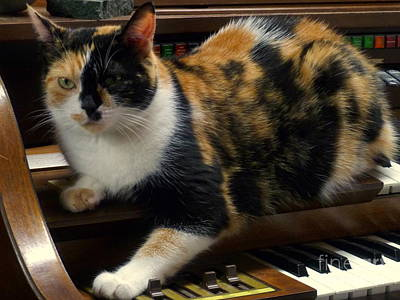 Of Calico Cats Photograph - Music Of The Night by Lingfai Leung