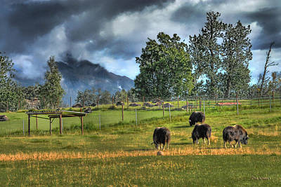 Photograph - Musk Ox Farm  by Dyle   Warren