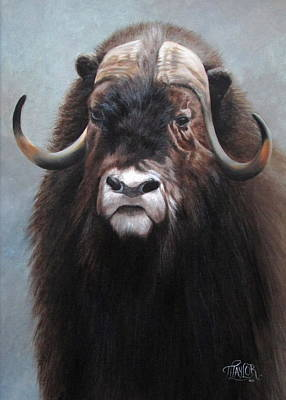 Musk Ox Art Print