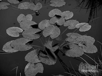 Photograph - Muskeg Pond by Laura  Wong-Rose