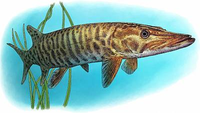 Muskellunge Art Print by Roger Hall