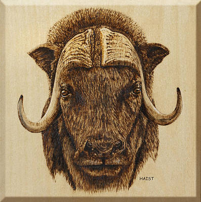 Pyrography - Muskox by Ron Haist