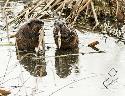 Photograph - Muskrat Date by Edward Peterson