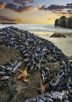Digital Art - Mussel Beach by Sharon Foster