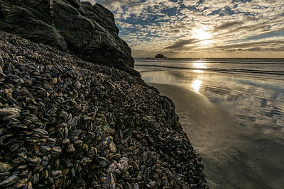 Of Big Sur Beach Photograph - Mussels And Barnacles On Rock by Panoramic Images