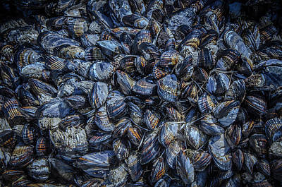 Photograph - Mussels In Blue Abundance by Roxy Hurtubise