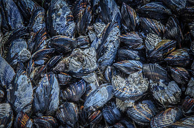 Photograph - Mussels In Blue Cluster by Roxy Hurtubise