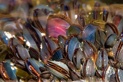 Photograph - Mussels Underwater by Peggy Collins