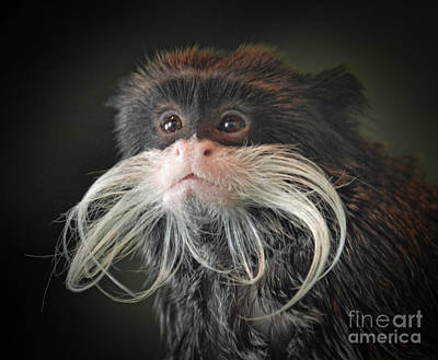 Mustache Photograph - Mustached Monkey Emperor Tamarin IIi  by Jim Fitzpatrick