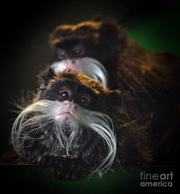 Mustache Photograph - Mustached Monkeys Emperor Tamarins  by Jim Fitzpatrick