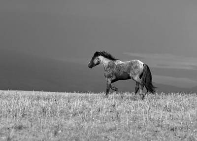 Latidude Image - Mustang 2 BW by Roger Snyder