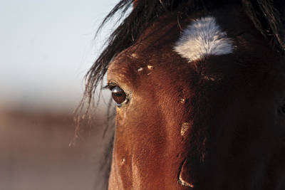 Wild Horse Photograph - Mustang Battle Wounds by Wes and Dotty Weber