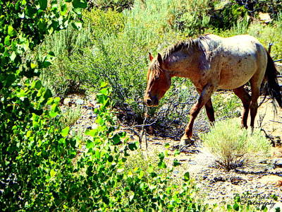 Photograph - Mustang In The Wild II by Bobbee Rickard