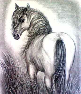 Art Print featuring the drawing Mustang by J L Zarek