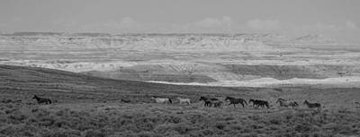 Photograph - Mustangs Of The Adobe by Angelique Rea