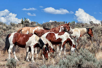 Red Dun Horse Photograph - Mustangs Roaming Free by Kathleen Bishop
