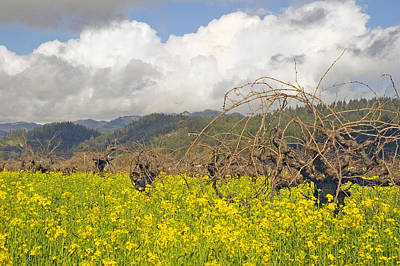 Photograph - Mustard Field by Mick Burkey
