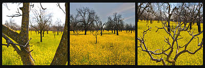 Photograph - Mustard Field Panel by SC Heffner