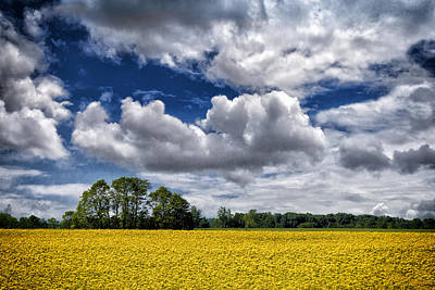 Photograph - Mustard Fields Central Illinois Img 8739 by Greg Kluempers