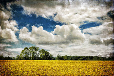 Photograph - Mustard Fields Central Illinois With Texture Img 8739 by Greg Kluempers