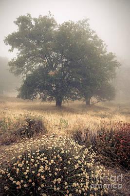 Photograph - Mute Oaks by Alexander Kunz
