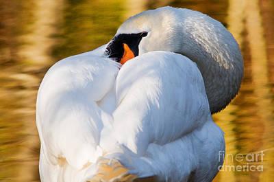 Waterfowl Photograph - Mute Swan 2 by Terry Elniski