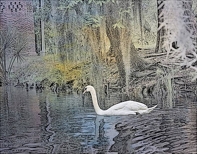 Photograph - Mute Swan by Judy Vincent