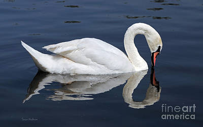 Photograph - Mute Swan Kissing Its Reflection by Susan Wiedmann