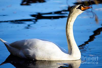 Photograph - Mute Swan Portrait by Terry Elniski
