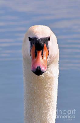 Photograph - Mute Swan Staring by Susan Wiedmann