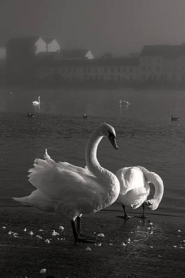 River Corrib Photograph - Mute Swans Galway Ireland by Pierre Leclerc Photography