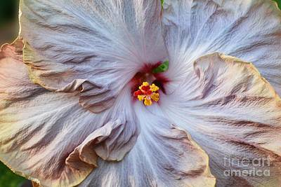 Muted Hibiscus Art Print by Cindy Manero