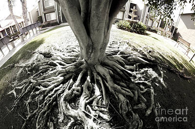 Photograph - Muted Roots by Clayton Bruster