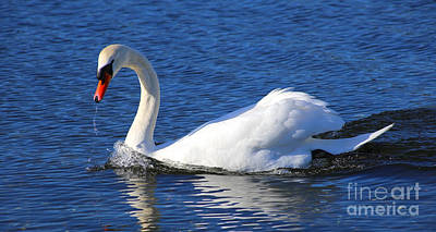 Painting - Muted Swan by Sue Harper