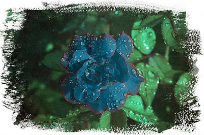 Photograph - My Blue Rose by David Yocum