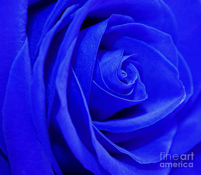 Blue Flowers Photograph - My Blue Valentine by Krissy Katsimbras